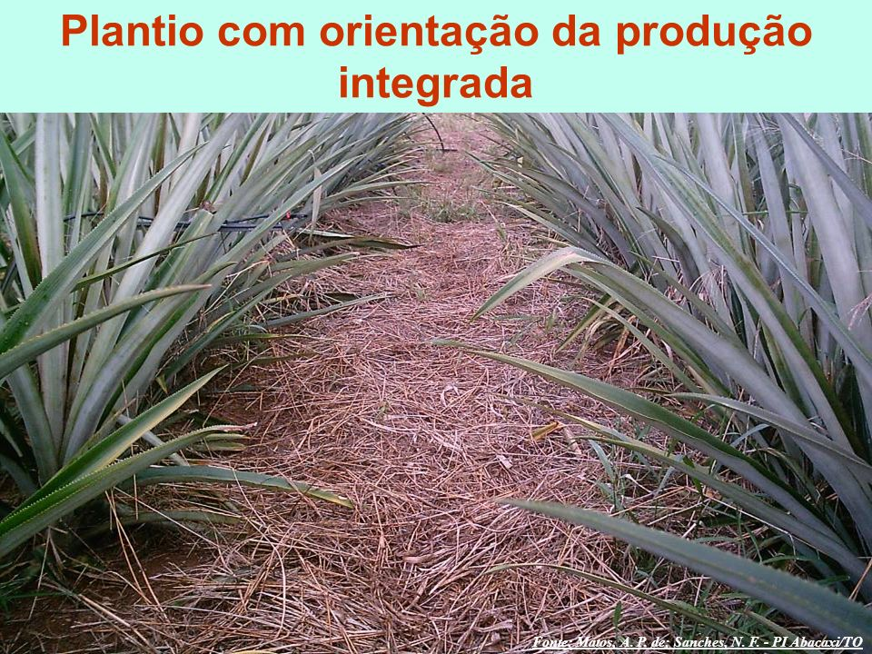 Plantio com orientação da produção integrada