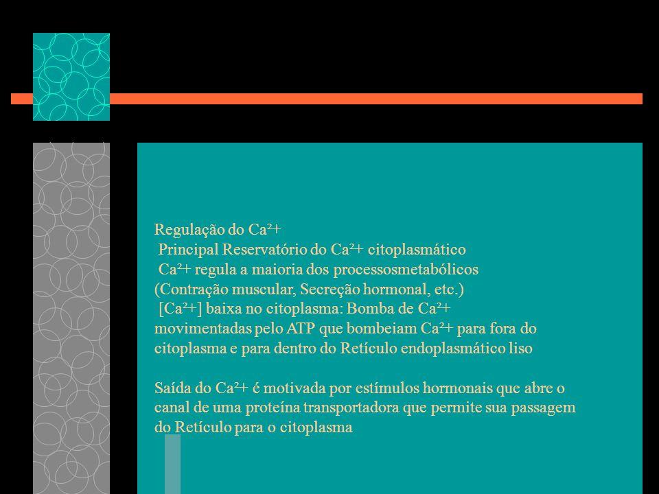 Regulação do Ca²+ Principal Reservatório do Ca²+ citoplasmático. Ca²+ regula a maioria dos processosmetabólicos.