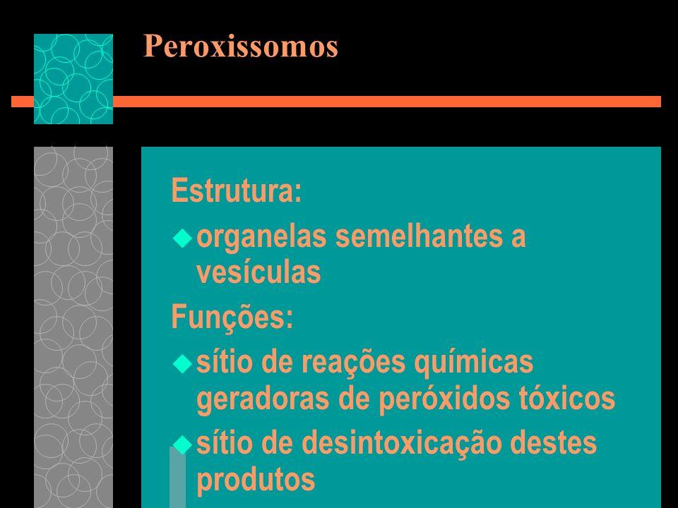 PeroxissomosEstrutura: organelas semelhantes a vesículas. Funções: sítio de reações químicas geradoras de peróxidos tóxicos.