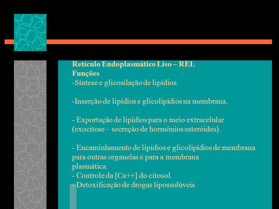 Retículo Endoplasmático Liso – REL