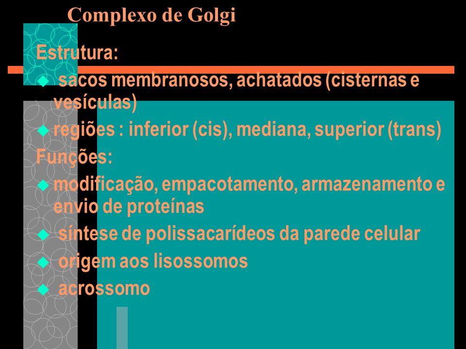 Complexo de GolgiEstrutura: sacos membranosos, achatados (cisternas e vesículas) regiões : inferior (cis), mediana, superior (trans)