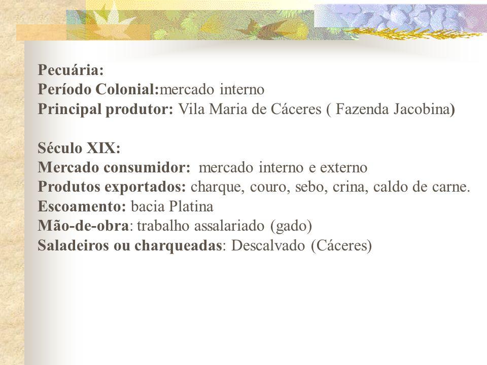 Pecuária: Período Colonial:mercado interno. Principal produtor: Vila Maria de Cáceres ( Fazenda Jacobina)