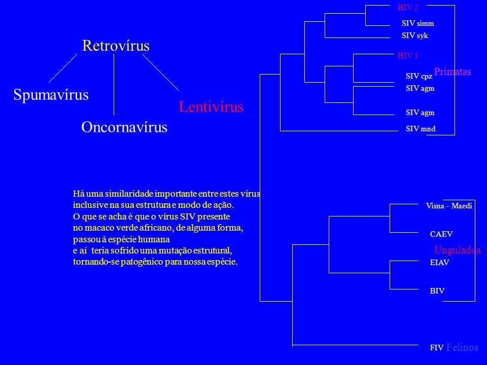 Retrovírus Spumavírus Lentivírus Oncornavírus Primatas Ungulados