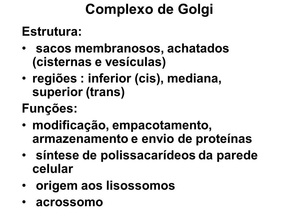 Complexo de Golgi Estrutura: