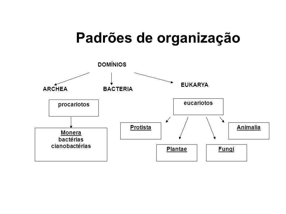 Padrões de organização