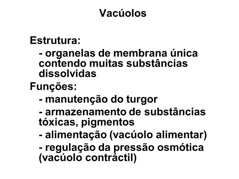 Vacúolos Estrutura: - organelas de membrana única contendo muitas substâncias dissolvidas. Funções: