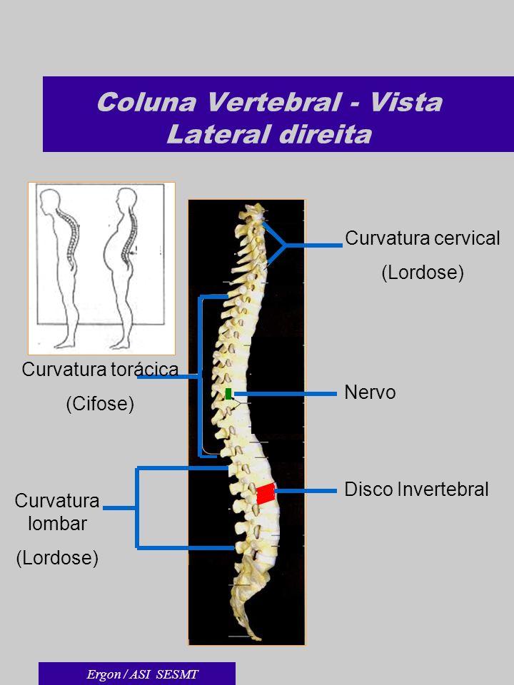 Coluna Vertebral - Vista Lateral direita