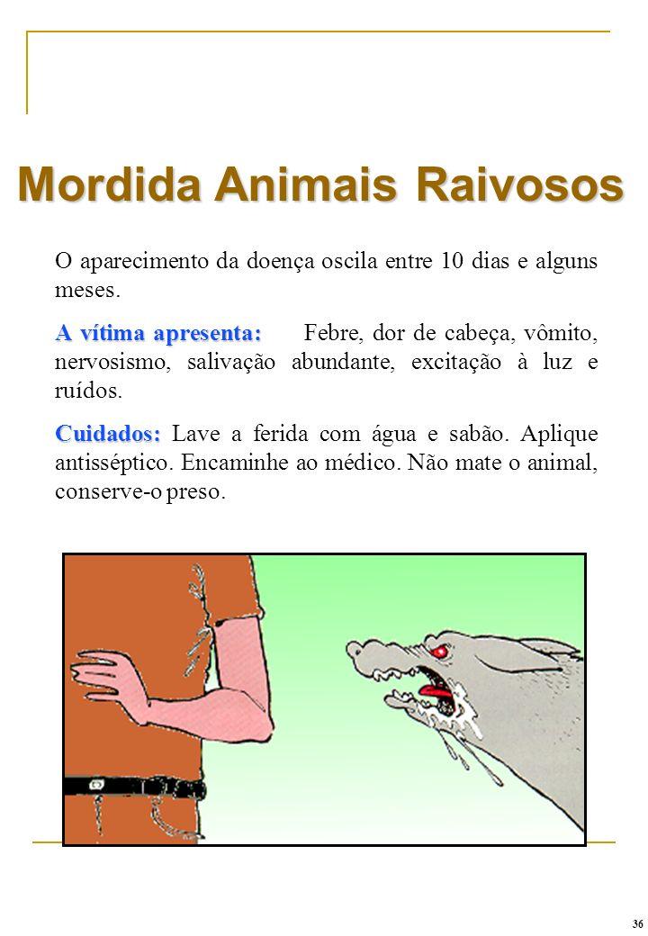 Mordida Animais Raivosos