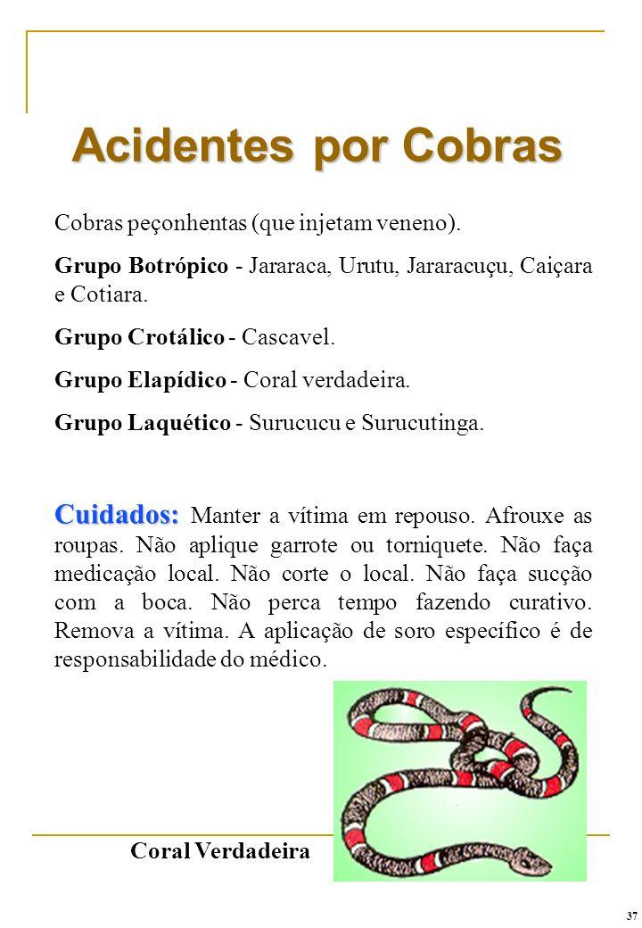 Acidentes por Cobras Cobras peçonhentas (que injetam veneno). Grupo Botrópico - Jararaca, Urutu, Jararacuçu, Caiçara e Cotiara.