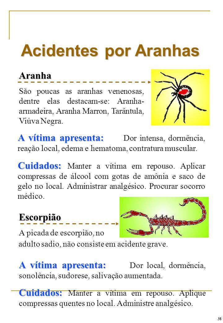 Acidentes por Aranhas Aranha