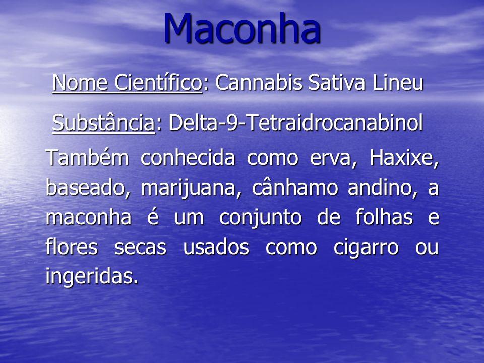 Maconha Nome Científico: Cannabis Sativa Lineu