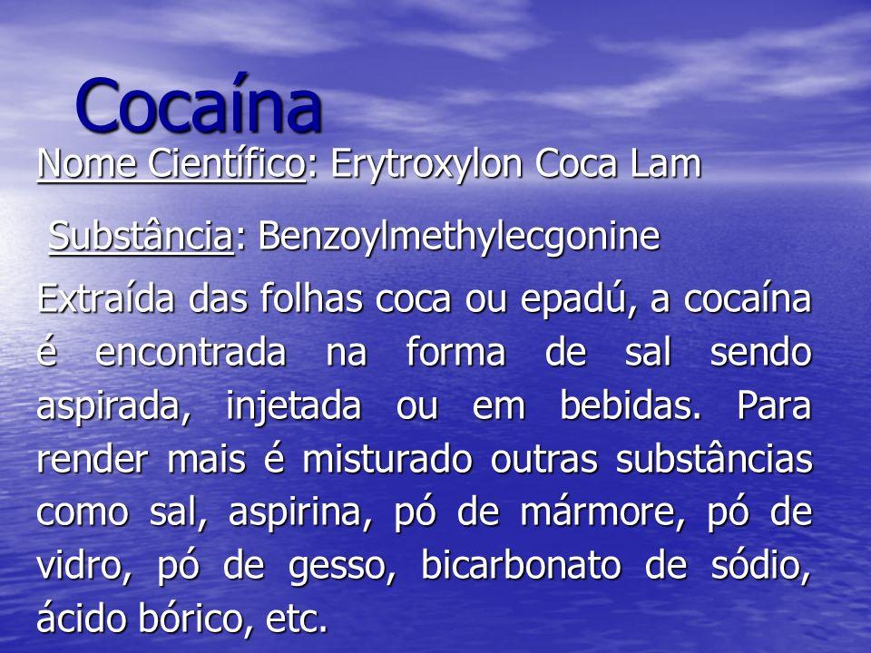 Cocaína Nome Científico: Erytroxylon Coca Lam