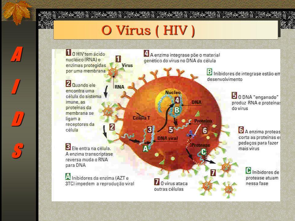 O Vírus ( HIV ) A I D S