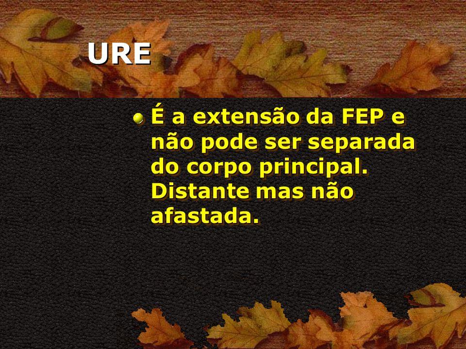 URE É a extensão da FEP e não pode ser separada do corpo principal. Distante mas não afastada.