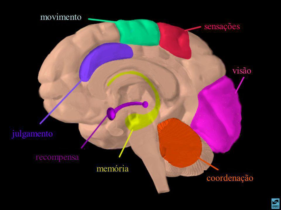 movimento sensações visão julgamento recompensa memória coordenação