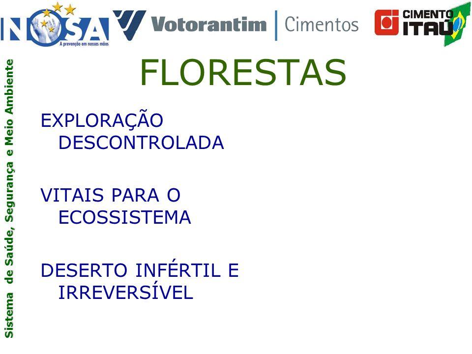 FLORESTAS EXPLORAÇÃO DESCONTROLADA VITAIS PARA O ECOSSISTEMA