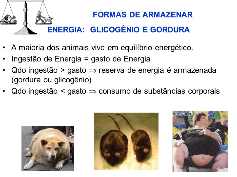FORMAS DE ARMAZENAR ENERGIA: GLICOGÊNIO E GORDURA