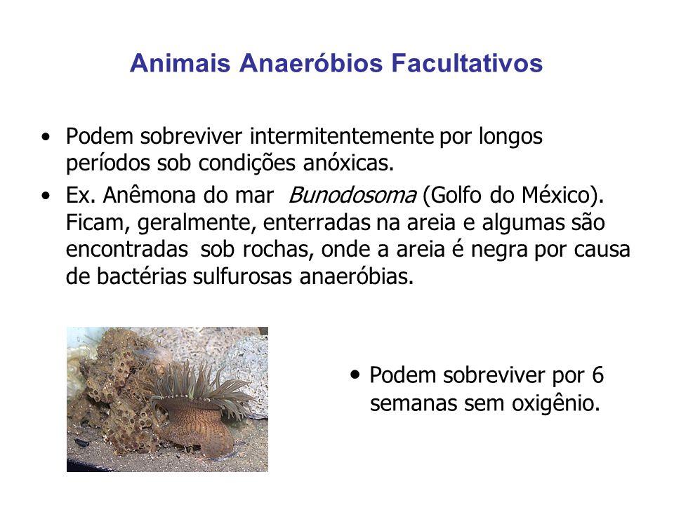 Animais Anaeróbios Facultativos