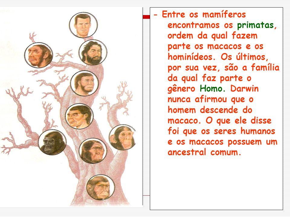 - Entre os mamíferos encontramos os primatas, ordem da qual fazem parte os macacos e os hominídeos.