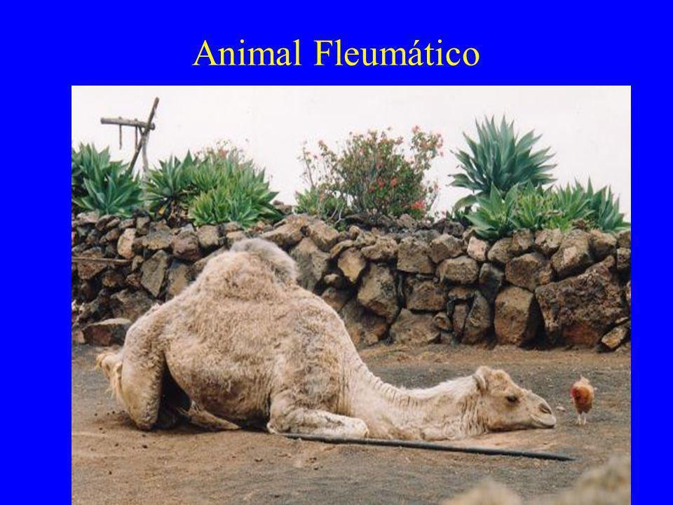 Animal Fleumático
