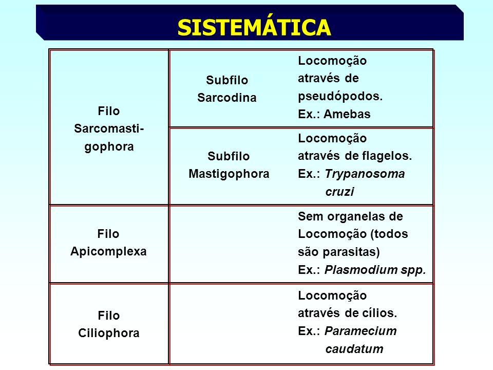 SISTEMÁTICA Subfilo Sarcodina Locomoção através de pseudópodos.