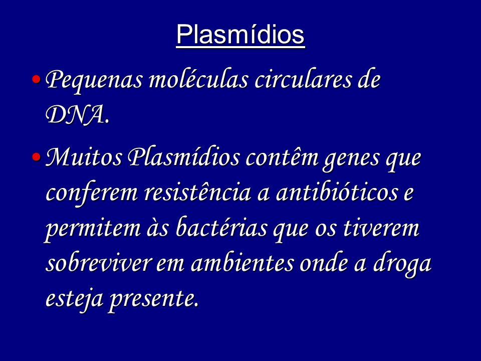 Pequenas moléculas circulares de DNA.