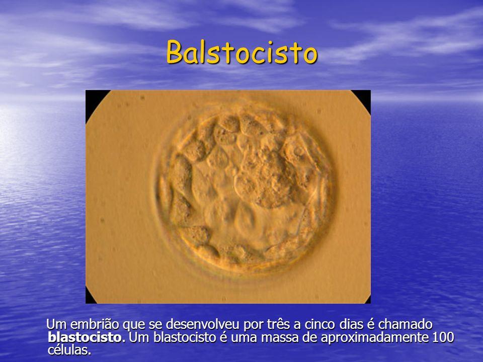 Balstocisto Um embrião que se desenvolveu por três a cinco dias é chamado blastocisto.
