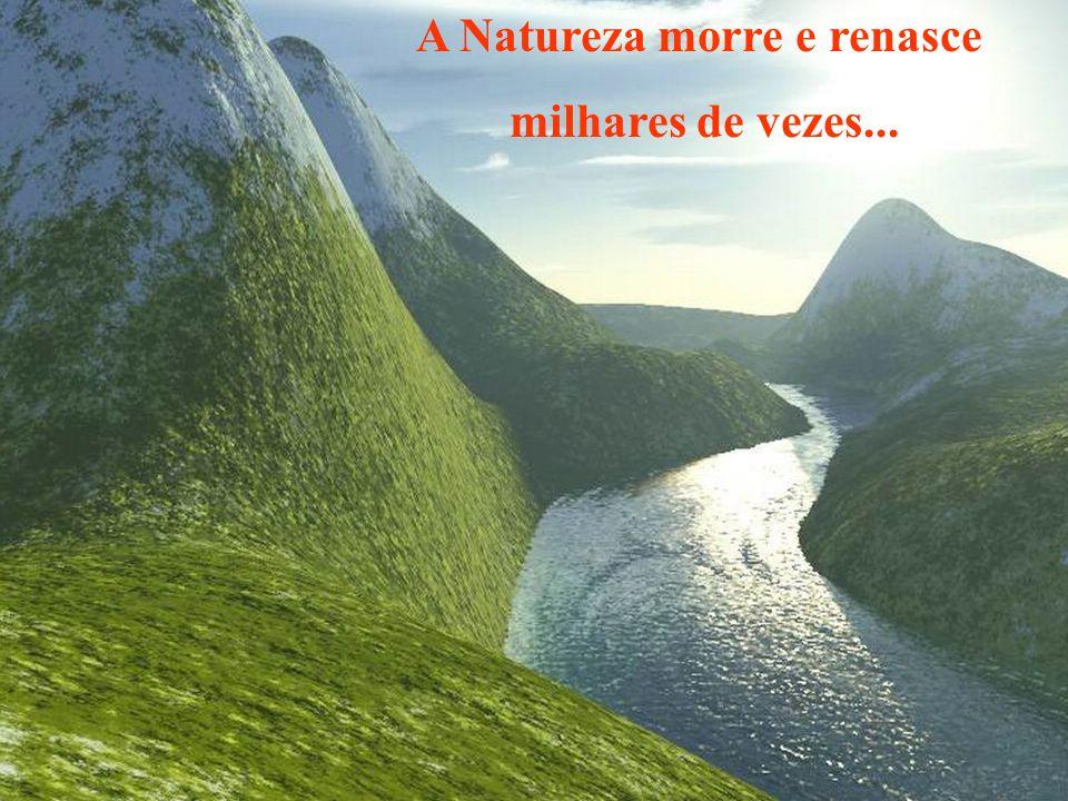 A Natureza morre e renasce