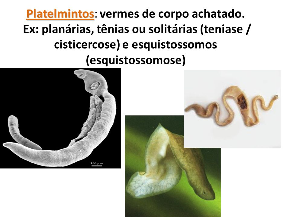 Platelmintos: vermes de corpo achatado