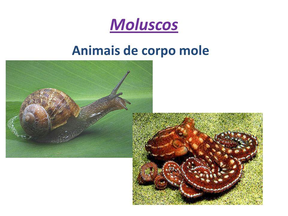 Moluscos Animais de corpo mole