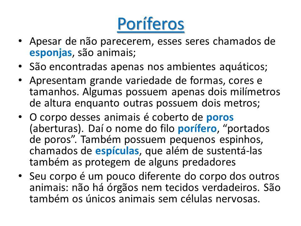 Poríferos Apesar de não parecerem, esses seres chamados de esponjas, são animais; São encontradas apenas nos ambientes aquáticos;