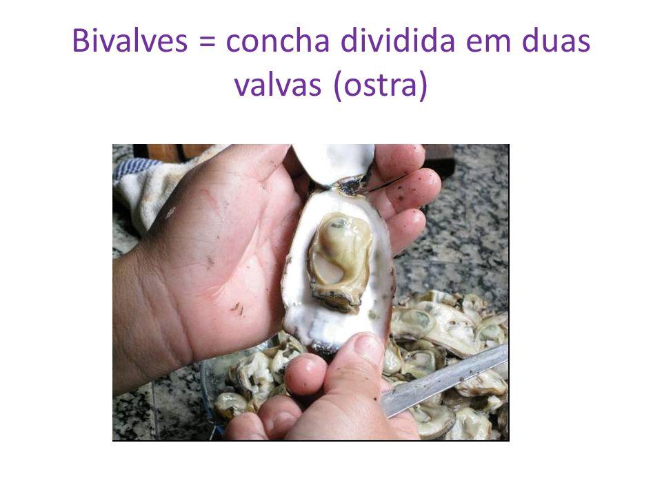 Bivalves = concha dividida em duas valvas (ostra)