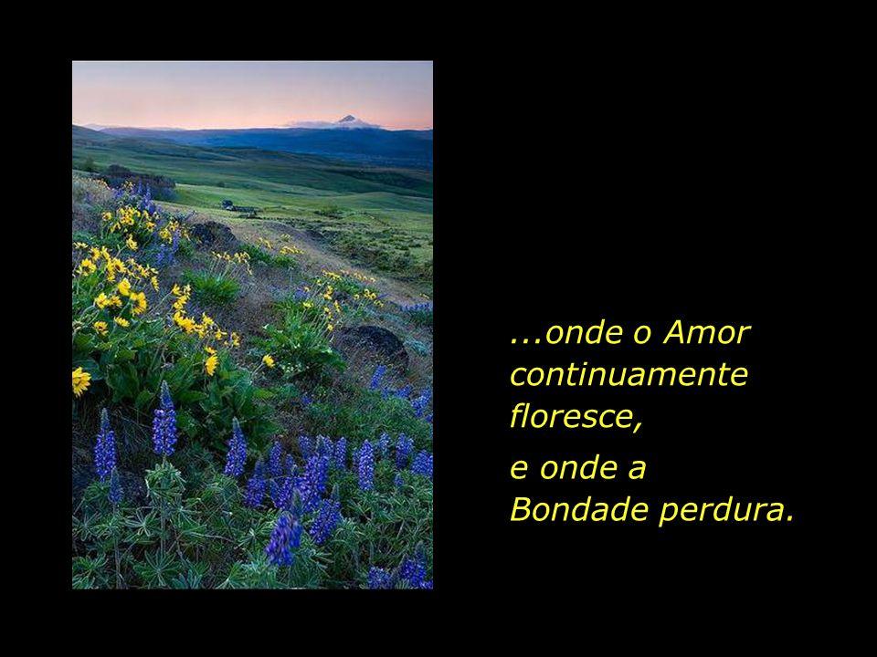 ...onde o Amor continuamente floresce,
