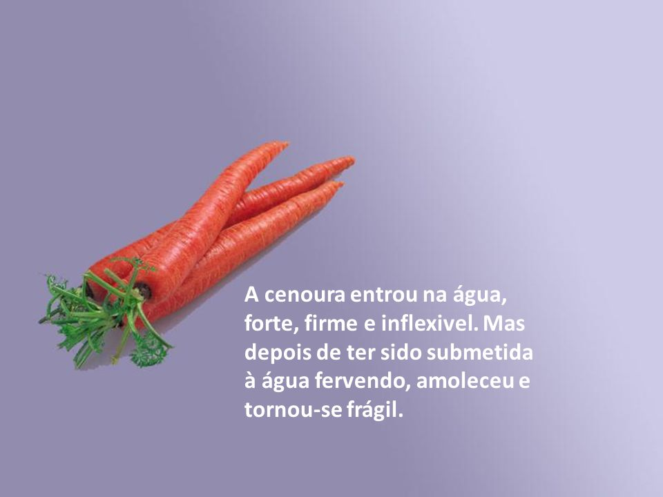 A cenoura entrou na água, forte, firme e inflexivel