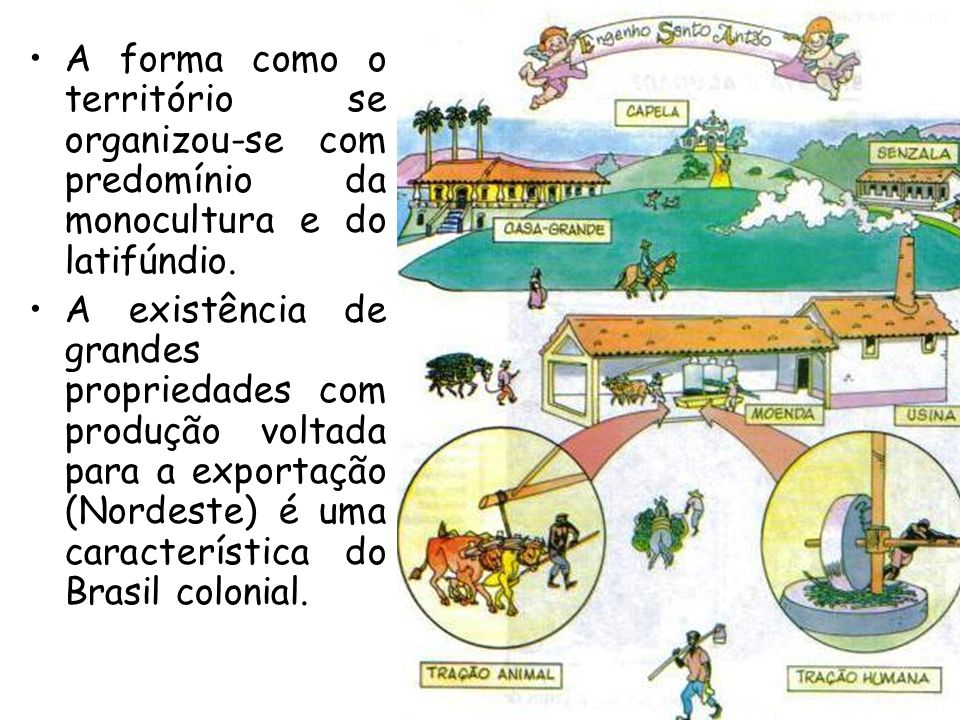A forma como o território se organizou-se com predomínio da monocultura e do latifúndio.
