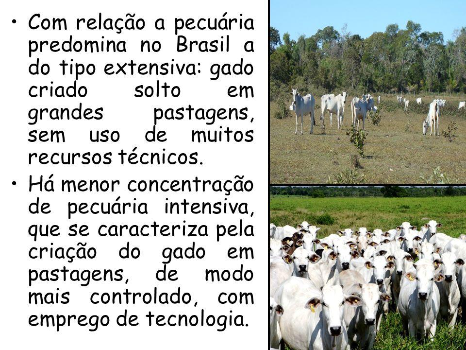 Com relação a pecuária predomina no Brasil a do tipo extensiva: gado criado solto em grandes pastagens, sem uso de muitos recursos técnicos.