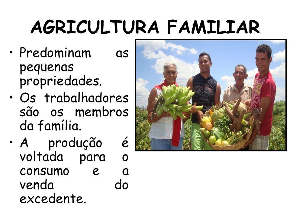 AGRICULTURA FAMILIAR Predominam as pequenas propriedades.