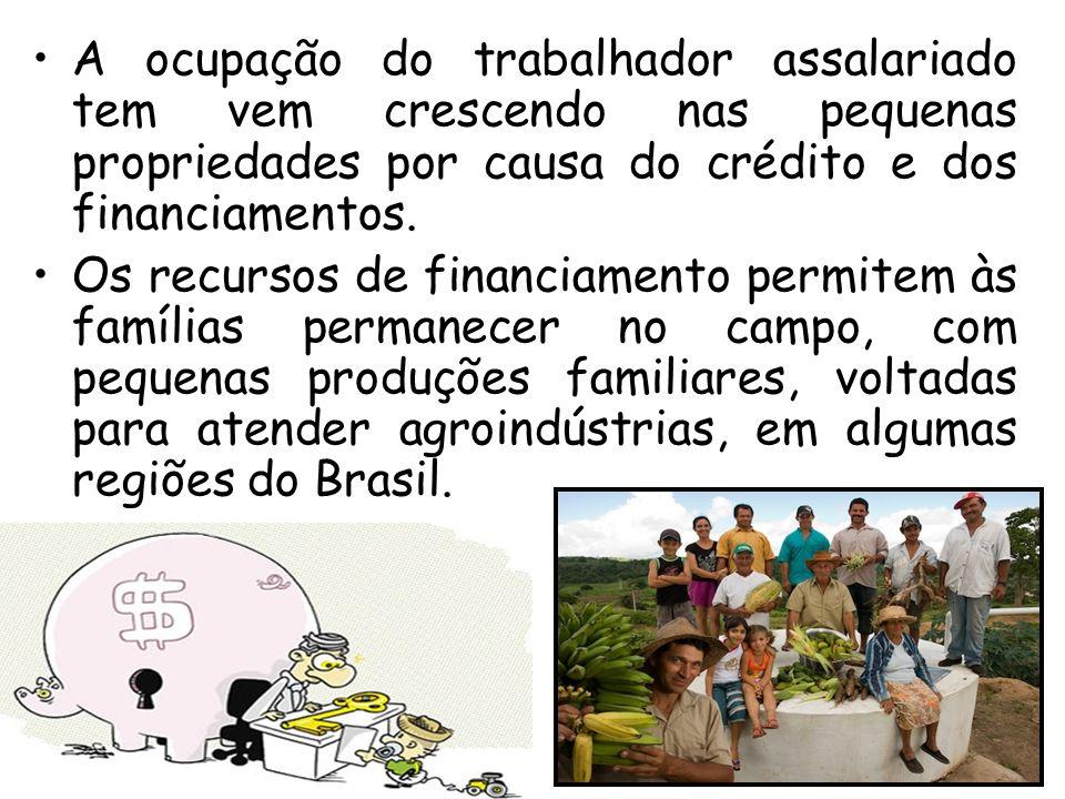 A ocupação do trabalhador assalariado tem vem crescendo nas pequenas propriedades por causa do crédito e dos financiamentos.