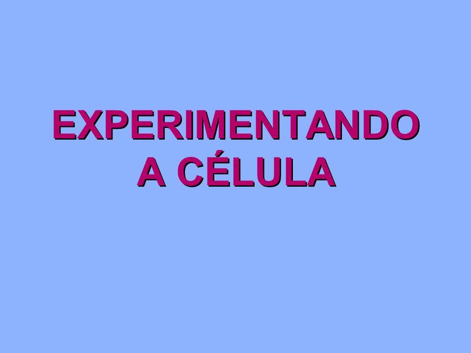 EXPERIMENTANDO A CÉLULA
