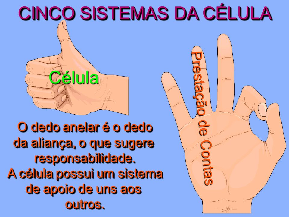 CINCO SISTEMAS DA CÉLULA