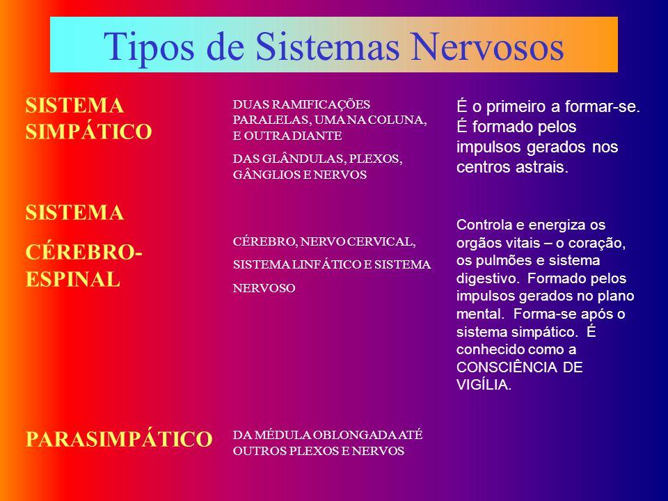 Tipos de Sistemas Nervosos