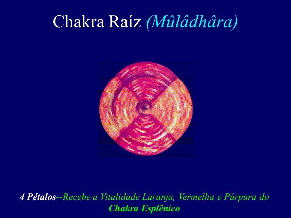 Chakra Raíz (Mûlâdhâra)