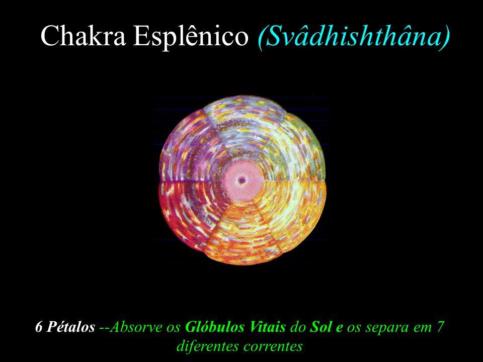 Chakra Esplênico (Svâdhishthâna)