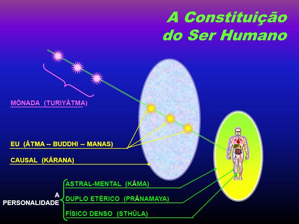 A Constituição do Ser Humano