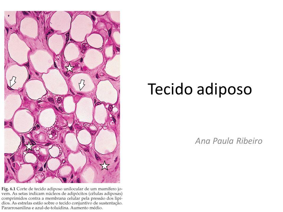 Tecido adiposo Ana Paula Ribeiro