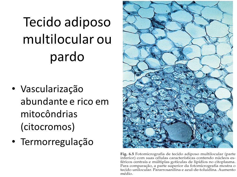 Tecido adiposo multilocular ou pardo