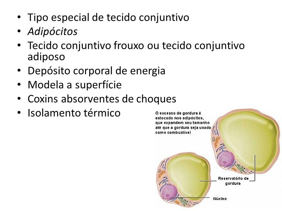 Tipo especial de tecido conjuntivo