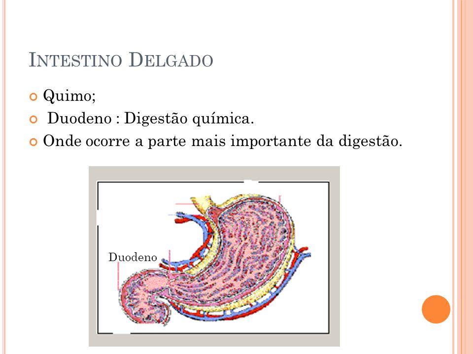 Intestino Delgado Quimo; Duodeno : Digestão química.