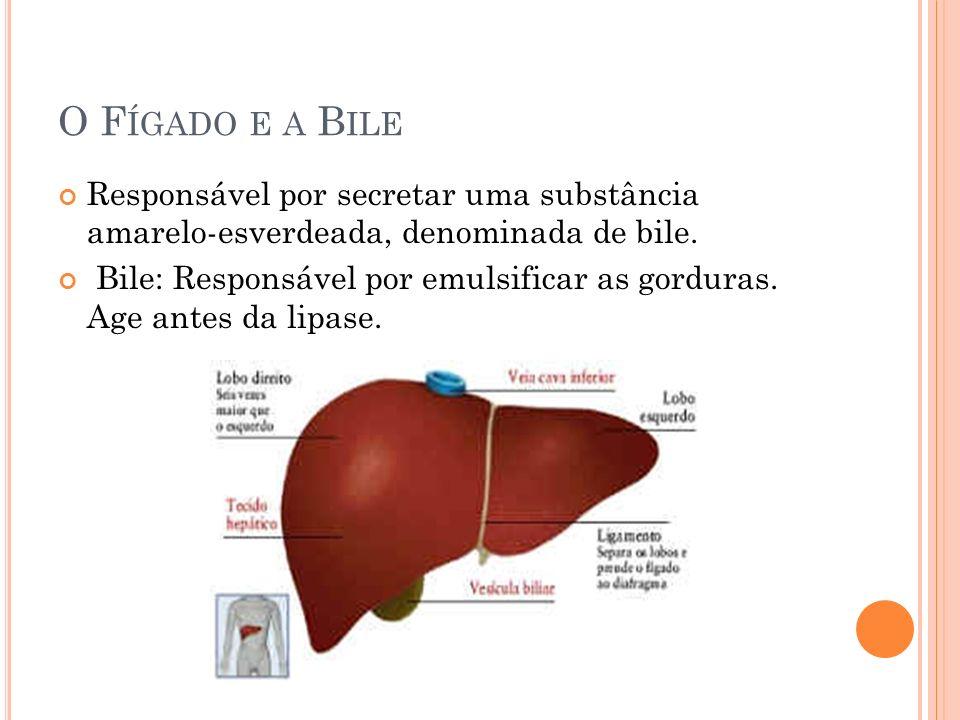 O Fígado e a BileResponsável por secretar uma substância amarelo-esverdeada, denominada de bile.