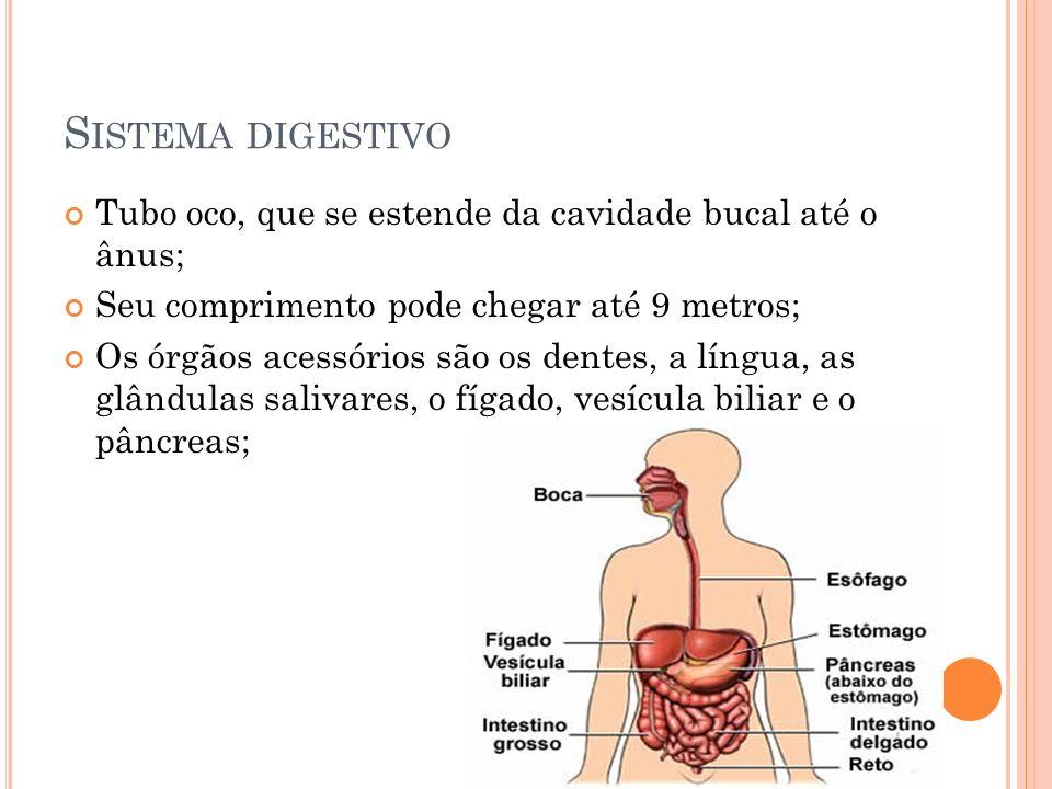 Sistema digestivo Tubo oco, que se estende da cavidade bucal até o ânus; Seu comprimento pode chegar até 9 metros;